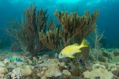 构成壁架礁石 免版税库存照片