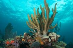 构成壁架礁石 图库摄影