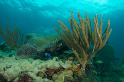 构成壁架礁石 免版税图库摄影