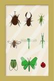 构成昆虫标本 库存图片