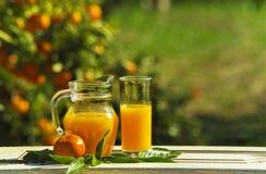 构成水罐和玻璃用汁液和tangerine 在以蜜桔庭院为背景的一张白色木桌上的 免版税库存图片