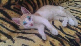 构成猫蓝色 免版税库存照片