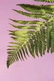 构成的绿色水平地照片工厂 免版税库存图片