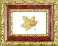 构成的被镀金的叶子槭树 免版税图库摄影