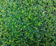 构成的绿色水平地照片工厂 免版税图库摄影