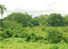 构成的绿色水平地照片工厂 库存照片