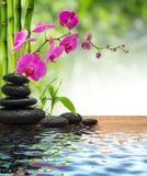构成竹子紫色兰花黑石头 免版税库存照片