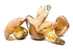 构成蘑菇 免版税图库摄影