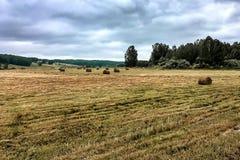 构成领域干草堆本质 库存照片