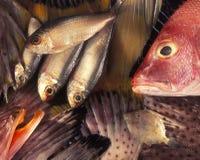构成鱼 免版税库存图片
