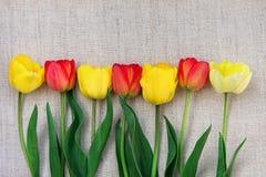 构成黄色红色郁金香在边界安排了在浅灰色的概略的亚麻布最低纲领派样式母亲` s天生日复活节 免版税库存图片