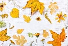 构成,黄色叶子的装饰 图库摄影