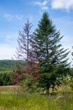 结构树二 免版税库存照片