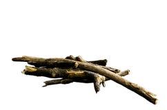 结构树分行 免版税图库摄影