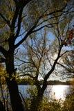 结构树剪影在日落期间的 免版税库存照片