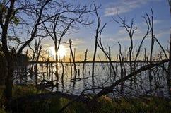 结构树剪影在日落的 图库摄影