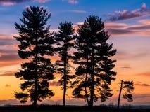 结构树剪影在日落的 免版税库存图片