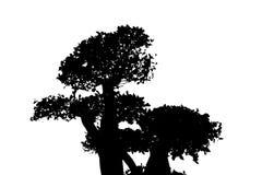 结构树剪影 免版税库存照片