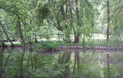 结构树反映在水中 图库摄影