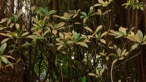 结构树叶子 库存图片