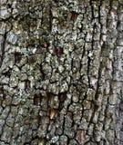 结构树吠声 背景 免版税库存照片