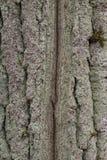 结构树吠声 库存照片