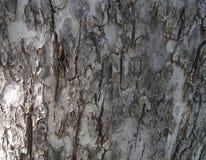 结构树吠声 图库摄影