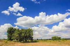 结构树和云彩 免版税库存照片