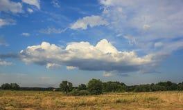 结构树和云彩 免版税库存图片