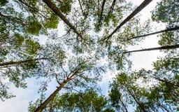 结构树和叶子 免版税库存图片
