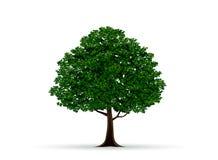 结构树和叶子 库存图片