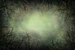 结构树和天空 免版税库存图片