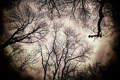 结构树和天空 库存照片