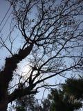 结构树和天空 库存图片