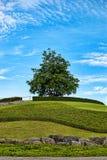 结构树和小山 库存图片