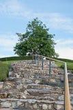 结构树和小山 库存照片