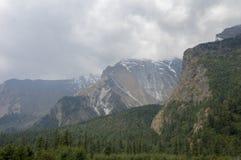 结构树和山 库存图片