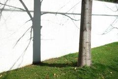 结构树和影子 库存图片