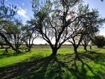 结构树和影子 免版税库存照片
