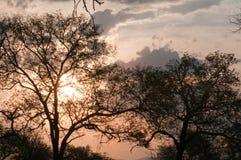 结构树和星期日 库存照片