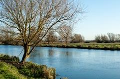 结构树和河 库存照片