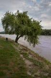 结构树和河 免版税库存图片