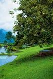 结构树和湖 库存图片