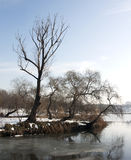 结构树和湖 免版税图库摄影