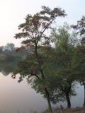 结构树和湖 图库摄影