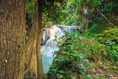 结构树和瀑布 免版税库存照片