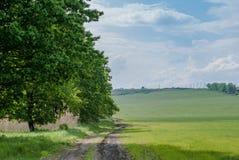 结构树和草甸 免版税库存图片