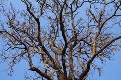 结构树和蓝天 免版税库存照片