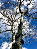 结构树和蓝天 免版税库存图片