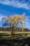 结构树在公园 库存图片
